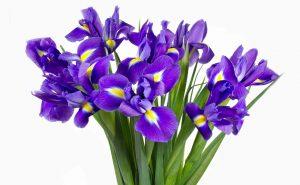 Доставка цветов в Тольятти | цветы Тольятти | ВцвеТочке | vcvetochke | купить цветы в Тольятти | букет Тольятти | цветы в тольятти дешево | купить цветы с доставкой в тольятти | ирисы