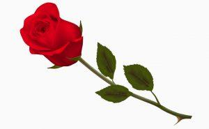 Доставка цветов в Тольятти | цветы Тольятти | ВцвеТочке | vcvetochke | купить цветы в Тольятти | букет Тольятти | цветы в тольятти дешево | купить цветы с доставкой в тольятти | роза