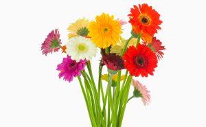 Доставка цветов в Тольятти | цветы Тольятти | ВцвеТочке | vcvetochke | купить цветы в Тольятти | букет Тольятти | цветы в тольятти дешево | купить цветы с доставкой в тольятти | гербера