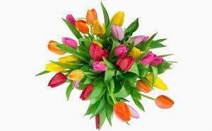 Доставка цветов в Тольятти | цветы Тольятти | ВцвеТочке | vcvetochke | купить цветы в Тольятти | букет Тольятти | цветы в тольятти дешево | купить цветы с доставкой в тольятти | тюльпаны
