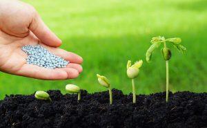 доставка цветов в тольятти, цветы тольятти, доставка цветов тольятти, удобрения, удобрение тольятти, удобрение для цветов, удобрения для растений, удобрения для растений тольятти